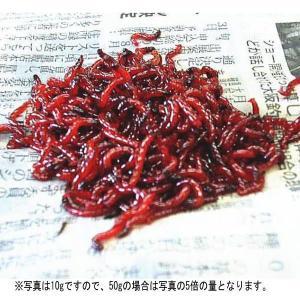 活きたアカムシ(赤虫) 徳大パック 50g 熱帯魚のエサにも最適|waterhouse
