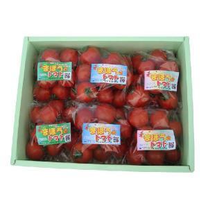 【ワトム農園直送】まほうのトマト6袋入り箱|watom