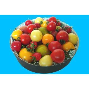 【ミディトマト】Color Tomato Collection|watom