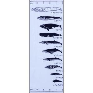 クジラの寸法    図鑑 大きさ比べ 手ぬぐい wazakka
