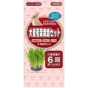 アラタ うさちゃん用大麦若葉栽培セット 6回分 ◇◇|webby