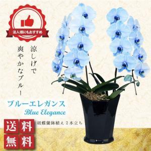 胡蝶蘭 ブルーエレガンス ビジネス・開店祝・移転祝・開業祝・周年記念・新築祝・就任祝・昇進祝・お中元・お歳暮・各種お祝用|webflora