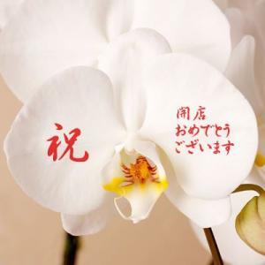 送料無料 名入れコチョーラン(胡蝶蘭3本立)|webflora