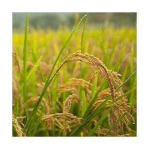 宮崎県産コシヒカリ10kg 白米 玄米 無洗米 放射能検査済|whitefood|02