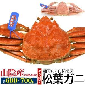 ブランドタグ付き 松葉ガニ(ズワイガニ) 約600〜700g 茹で冷凍 産地直送 返品不可|wil-mart