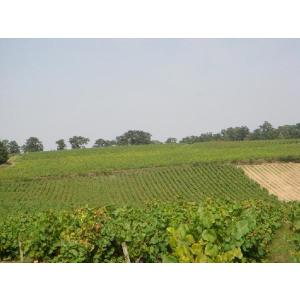 シャンパン スパークリングワイン ドメーヌ・ランドロン・ヴァン・ムスー|wineholic|04