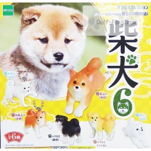 (台紙)柴犬6 (定形外郵便可能)|wolffang