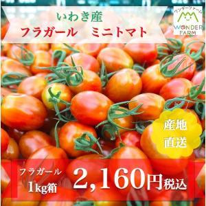 ミニトマト 贈答  日射量が多く温暖な気候のいわき市で太陽の光をいっぱい浴びて育った、ミニトマトの「...