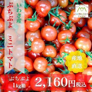 ぷちぷよ 1kg箱 新食感 ミニトマト ワンダーファーム 産...
