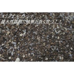 オリジナル用土|wonderpurants