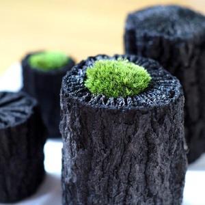炭インテリア・プリザーブド 炭花壇 炭苔 中|woodystoreak