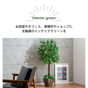 フェイクグリーン 光触媒 人工観葉植物 ベンジ...の詳細画像2