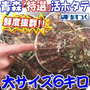 ホタテ殻付き 甘くとろける貝柱 活ホタテ 青森県陸奥湾産 漁師直送 特選最高級 特選活ほたて 大サイズ6キロ(約30枚前後入り) のし対応|world-wand