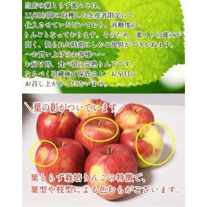りんご 5kg クール便対応 サンふじ 家庭用 青森県産りんご 訳あり サンふじ 5キロ箱 約11玉〜25玉入り|world-wand|14