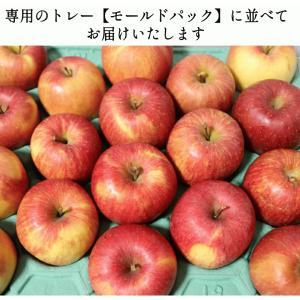 りんご 5kg クール便対応 サンふじ 家庭用 青森県産りんご 訳あり サンふじ 5キロ箱 約11玉〜25玉入り|world-wand|15