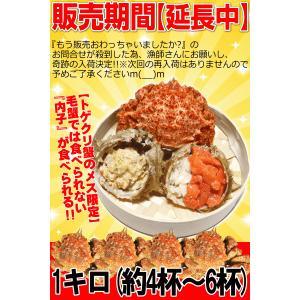 カニ かに 蟹 トゲクリ蟹 青森陸奥湾 浜茹で トゲクリカニ メス 1キロ(7杯~11杯) かにみそと内子が美味|world-wand|04