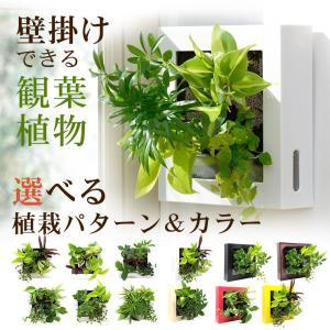 送料無料 壁掛けできる観葉植物 ミドリエ デザイン「フレーム」選べる!植栽パターン&カラー|worldgarden