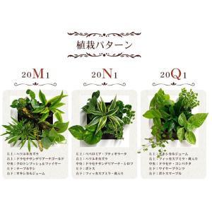 送料無料 壁掛けできる観葉植物 ミドリエ デザイン「フレーム」選べる!植栽パターン&カラー worldgarden 02