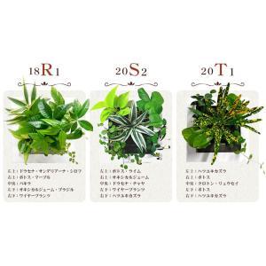 送料無料 壁掛けできる観葉植物 ミドリエ デザイン「フレーム」選べる植栽8パターン&6色|worldgarden|03