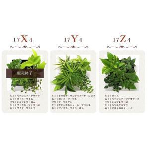 送料無料 壁掛けできる観葉植物 ミドリエ デザイン「フレーム」選べる!植栽パターン&カラー worldgarden 05