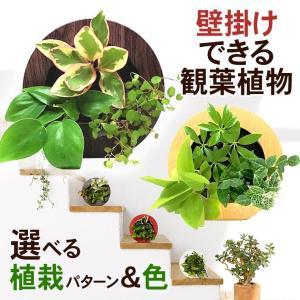 壁掛け観葉植物 ミドリエ デザイン 丸型 木目調グリーンフレーム|worldgarden