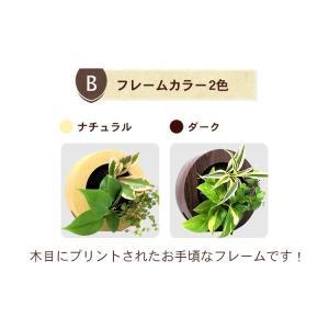 壁掛け観葉植物 ミドリエ デザイン 丸型 木目調グリーンフレーム|worldgarden|03