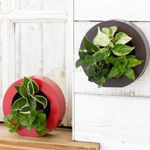 壁掛け観葉植物 ミドリエ デザイン 「グリーンフレーム」 丸型|worldgarden
