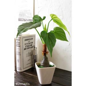 フェイクグリーン アローカシア 光触媒加工 (人工観葉植物)|wutty