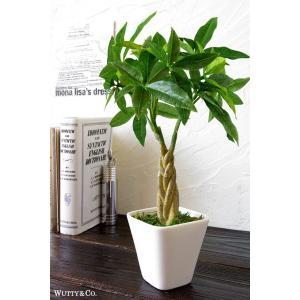 フェイクグリーン パキラ 光触媒加工 (人工観葉植物)|wutty