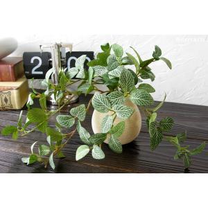 フェイクグリーン フィットニア 光触媒加工 ( 人工観葉植物 イミテーショングリーン )|wutty