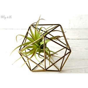 人工観葉植物 エアプランツ + 多面体フレーム セット ( フェイクグリーン オブジェ 置物 吊り下げ ハンギング )|wutty
