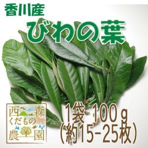 【送料無料】香川産 びわの葉 100g(1袋 生葉15-25枚)♪[国産 無農薬](枇杷の葉・ビワの葉)