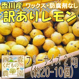 香川産 訳ありレモン2.5kg[2つから送料無料♪]