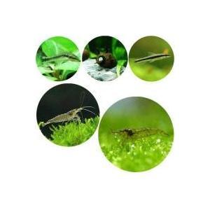 水草を美しく育てる上で最も厄介なコケを最大限に予防する為のフルセットです。水草の食害が少ない種を組み...