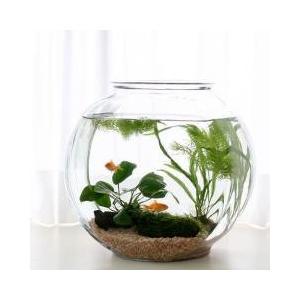 おしゃれなガラス製金魚鉢かわいくレイアウトしてインテリアにインテリア向けのドラム型の鉢に金魚を入れて...