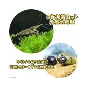 ヤマトヌマエビとコケ取り貝のお得なセットヤマトヌマエビ+(B品)カラーサザエ石巻貝貝:セット内容:・...