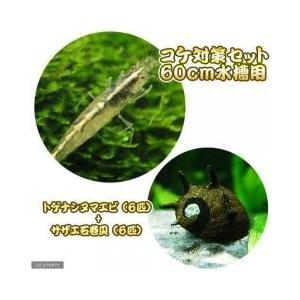 コケ対策セット 60cm水槽用 トゲナシヌマエビ(6匹) + サザエ石巻貝(6匹):セット内容:・ト...