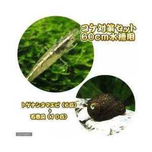 コケ対策セット 60cm水槽用 トゲナシヌマエビ(6匹) + 石巻貝(10匹):セット内容:・トゲナ...