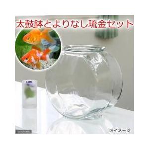 金魚鉢 大と金魚のセットおしゃれなガラス製金魚鉢に、金魚の代表格の琉金を組み合わせたセットです。どこ...