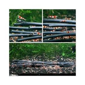 水槽用アクセサリ / 特選竹炭 棒状 5本セット