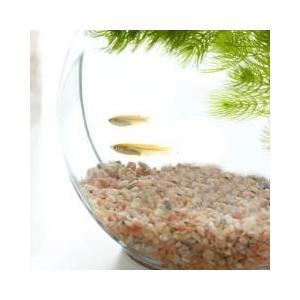 おしゃれなガラス製金魚鉢かわいくレイアウトしてインテリアにインテリア向けのドラム型の鉢にメダカを入れ...