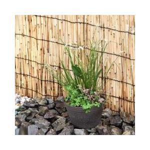手軽に始められるコンパクトなビオトープセット耐寒性のある水辺植物の寄せ植えに、日本庭園にも馴染むシッ...