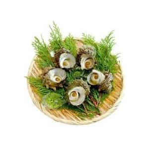 魚介類・海産物 / 国産 ボイル サザエ 5粒 冷凍便