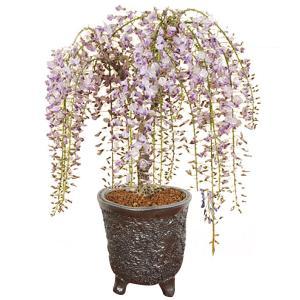 盆栽:特選極太一才藤(瀬戸焼志野釉ちぎり鉢)*藤 鉢植え 鉢花 プレゼント 花見 送料無料 2020年 春 開花予定|y-bonsai