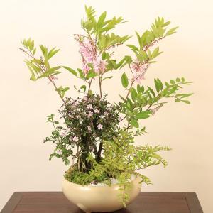盆栽:香丁木寄せ植え*|y-bonsai