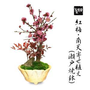 盆栽:紅梅・南天寄せ植え(瀬戸焼鉢)*|y-bonsai