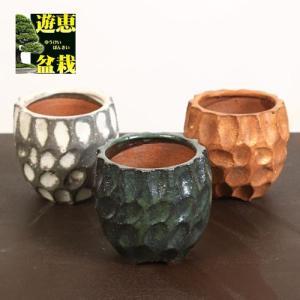 信楽面取鉢 y-bonsai