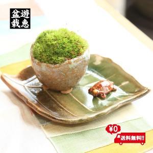 遅れてごめんね 敬老の日 苔盆栽:長寿苔鉢*長寿亀&受け皿付 山苔 祝い ギフト gift 誕生日祝 御祝 プレゼントにも|y-bonsai