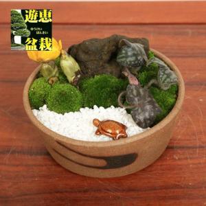寄せ植え:福寿草・雪割草寄せ(亀付き)*【送料無料】|y-bonsai