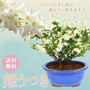 遅れてごめんね 母の日ギフト 小品盆栽:姫うつぎ(楕円茶色陶器鉢)*姫空木姫ウツギプレゼント 花 鉢植え 鉢花  お花見|y-bonsai